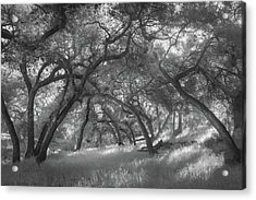 Acrylic Print featuring the photograph Hollenbeck Oak Hollow by Alexander Kunz
