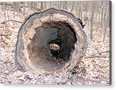 Hollow Log Acrylic Print by Carolyn Postelwait