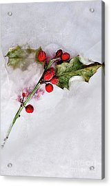 Holly 4 Acrylic Print