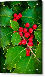Holly 9218 Acrylic Print by Dan Beauvais