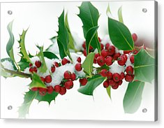 Acrylic Print featuring the photograph Holly Berries On White by Sharon Talson