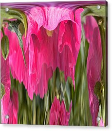 Hollyhock Drape Abstract Acrylic Print by Aliceann Carlton