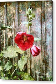 Acrylic Print featuring the photograph Hollyhock On Weathered Wood - Remember The Days by Janine Riley