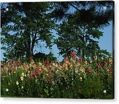 Hollyhocks And Trees Acrylic Print