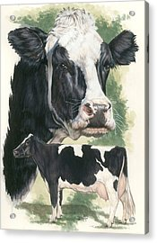 Holstein Acrylic Print by Barbara Keith