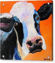 Holy Cow Acrylic Print