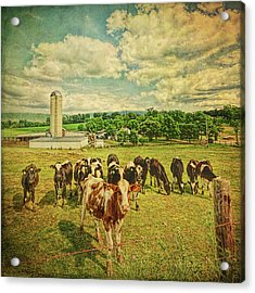 Acrylic Print featuring the photograph Holy Cows by Lewis Mann