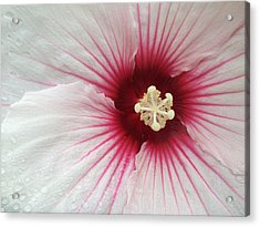 Holy Hibiscus Acrylic Print by Emerald GreenForest