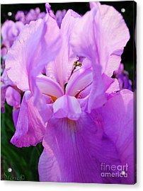 Holy Iris Acrylic Print