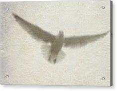 Holy Spirit Acrylic Print by Vienne Rea