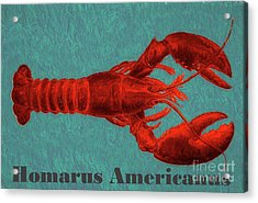 Homarus Americanus Acrylic Print