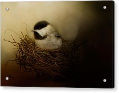 Home Tweet Home Acrylic Print by Jai Johnson