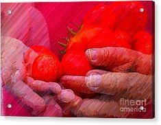 Homegrown Red Ripe Tomatoes Acrylic Print by Lewis Lang