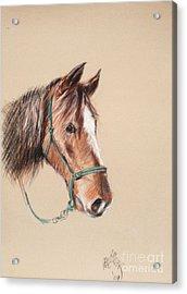 Honcho At The Morgan Horse Ranch Prns Acrylic Print by Paul Miller