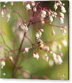 Honey Acrobat Acrylic Print