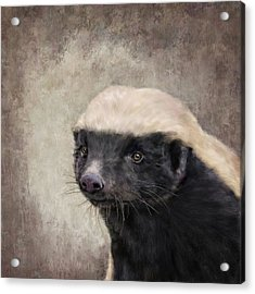 Honey Badger Acrylic Print