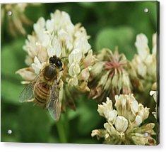 Acrylic Print featuring the photograph Honey Bee by Pamela Walton