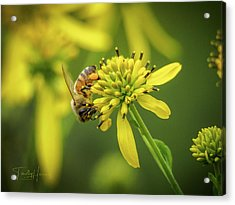 Honeybee 21 Acrylic Print