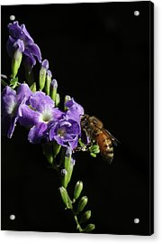 Acrylic Print featuring the photograph Honeybee On Golden Dewdrop by Richard Rizzo