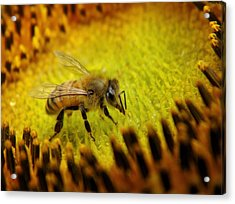 Acrylic Print featuring the photograph Honeybee On Sunflower by Chris Berry