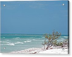Honeymoon Island Shores Acrylic Print