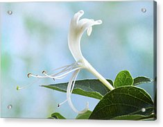 Acrylic Print featuring the photograph Honeysuckle Portrait. by Terence Davis