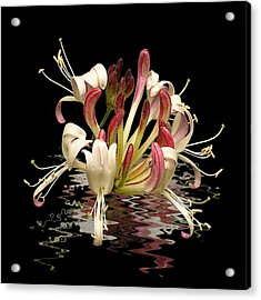 Honeysuckle Reflections Acrylic Print