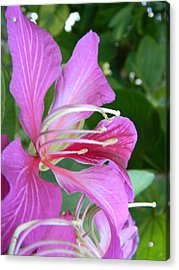 Hong Kong Orchid In Lakeland Acrylic Print by Warren Thompson
