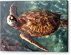Honu Green Sea Turtle Maui Hawaii Acrylic Print by Pierre Leclerc Photography