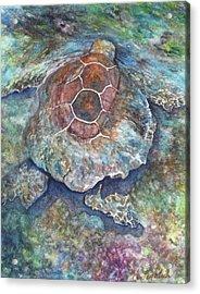 Honu Ill Acrylic Print by Kerri Ligatich