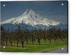 Hood Orchard Acrylic Print
