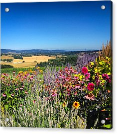 Hood River Valley Flowers Acrylic Print by Brian Governale