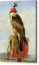 Hooded Falcon Acrylic Print by Sir Edwin Landseer