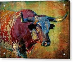 Hook 'em 2 Acrylic Print by Colleen Taylor
