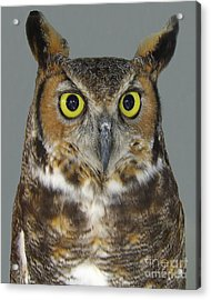 Hoot-owl - I'm Looking At You Acrylic Print by Merton Allen