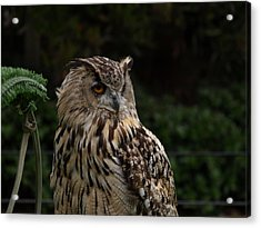Hoot Owl Acrylic Print by Laura Allenby