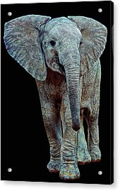 Hope For The Future Acrylic Print by Michael Durst