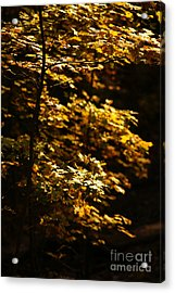 Hope Leaves Acrylic Print by Linda Shafer