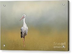 Hope Of Spring Acrylic Print by Eva Lechner