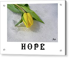 Acrylic Print featuring the photograph Hope by Traci Cottingham