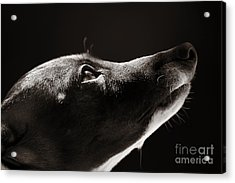 Acrylic Print featuring the photograph Hopeful by Angela Rath