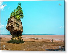 Hopewell Rocks In New Brunswick -  Canada Acrylic Print