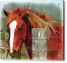 Give Me A Carrot Acrylic Print by Dorothy Berry-Lound