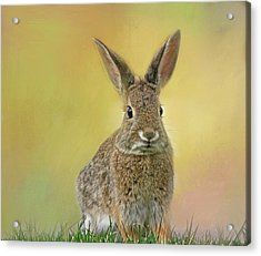 Acrylic Print featuring the photograph Hoppy Spring by Donna Kennedy