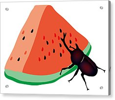 Horn Beetle Is Eating A Piece Of Red Watermelon Acrylic Print