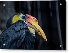 Acrylic Print featuring the photograph Hornbilled Bird by Scott Lyons