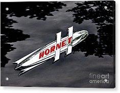 Hornet Acrylic Print