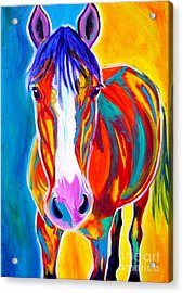 Horse - Pistol Acrylic Print by Alicia VanNoy Call