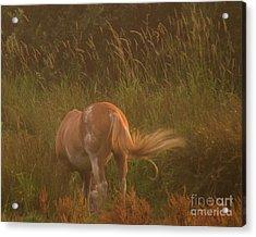 Horse 4 Acrylic Print