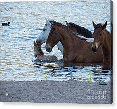 Horse 6 Acrylic Print